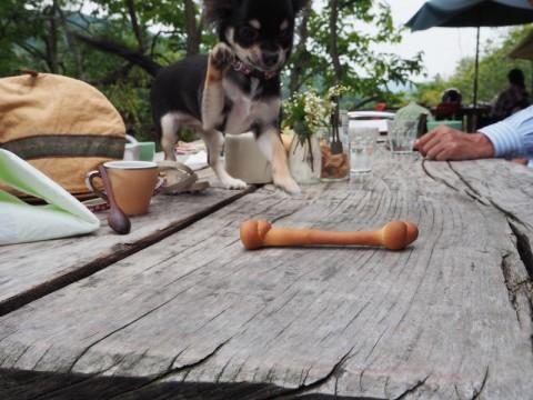 カフェ氣遊犬用パン